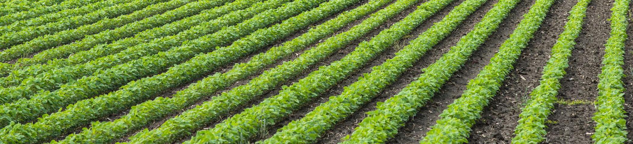 Pestycydy żywność Konwencjonalna Kontra Eko Platforma B2b Bio
